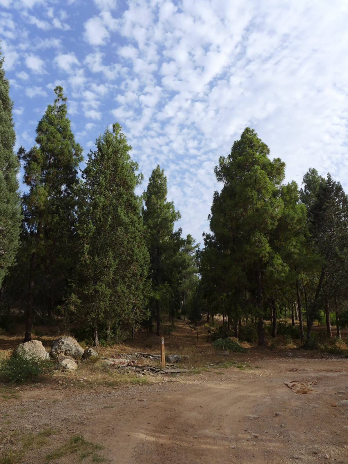 יער חריש 2013